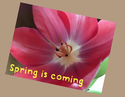 https://www.kakaovysvet.sk/en/33-spring